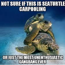 Turtle Memes - the best turtle memes memedroid