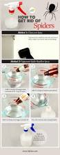 how to get rid of spiders without chemicals fab how