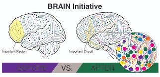 Brain Mapping Human Brain Mapping Human Brain Mapping Project Clip Art Library
