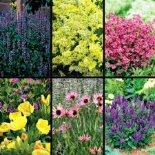 45 best perennials minnesota hardy images on pinterest flower