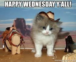Kitty Meme Generator - happy wednesday y all cowboy kitty meme generator