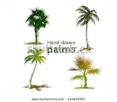 palm tree sketch stock images royalty free images u0026 vectors