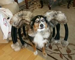 spooktacular halloween costumes for dogs u2013 gabbing geek