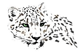 winged snow leopard tattoo stencil photos pictures and sketches