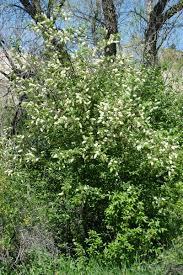 fairhill native plants guide to poisonous plants u2013 college of veterinary medicine and