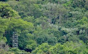 Texas forest images Texas a m takes lead on tropical forest evapotranspiration grant jpg