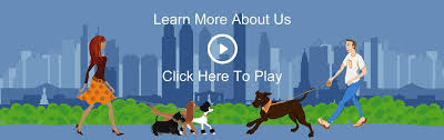 dog walkers pet sitting philly pet care morrisville pa