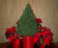 potted christmas trees for sale christmas lights decoration