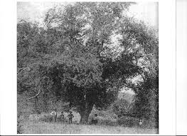 looking back on southside the history of county s apples