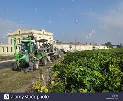 learn about st julien bordeaux picking the grapes at st julien bordeaux stock photo