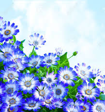 floral daisy border fresh spring blue blooming flowers over
