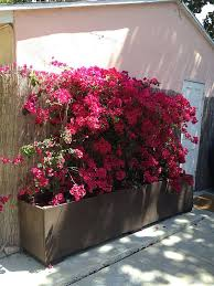 Free Outdoor Planter Box Plans by 111 Best Planter Box Plans Images On Pinterest Planter Boxes