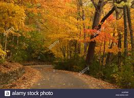 fall trees in percy warner park in nashville tennessee usa stock