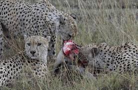 imagenes de animales carnivoros para imprimir animales carnívoros animalesmascotas