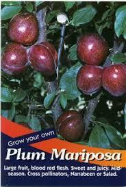 my edible fruit trees plum trees vic