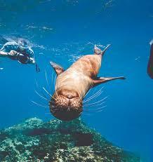 galapagos sea lion u2013 national geographic society blogs