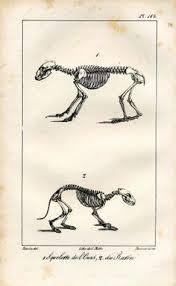 Dog Anatomy Book Vintage Camel Anatomy Print Skeleton Illustration Color Animal