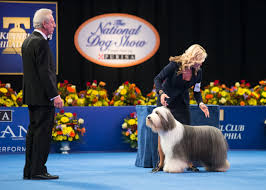scotch plains bearded collie wins in at national