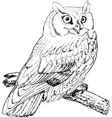 Owl Coloring Pages Owl Alphabet Coloring Pages Animal Owl Owl Color Pages