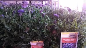 another reason i don u0027t buy plants at home depot u2013 gardeninacity