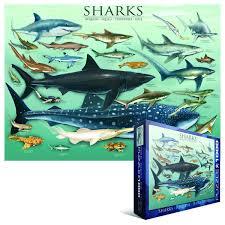 amazon com eurographics sharks 1000 piece puzzle toys u0026 games