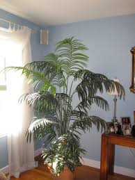 living room artificial plants decor color ideas gallery and living