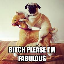 18 best bitch im fabulous images on pinterest funny stuff funny