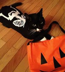 Funny Halloween Costumes Cats 25 Cats Costumes Ideas Cat Costumes Cute