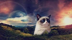 Motivational Meme Generator - motivational grumpy cat blank template imgflip