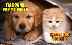Cute Kittens Meme - dawg got to go chow imgflip
