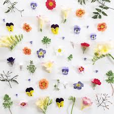 pressed flowers diy tips to press flowers from mr studio london gardenista