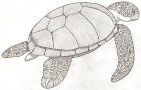 turtle turtle sketch by psybreon on deviantart