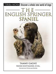 the english springer spaniel terra nova tammy gagne