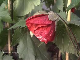 monterey bay nurser plants a