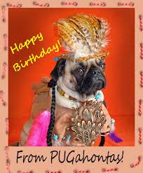 doggonegreetings ecards for dog lovers pug happy birthday