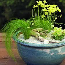 Indoor Plant Arrangements Simply Fun Stuff Create Your Own Indoor Plant Arrangements