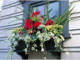 Flowers For Window Boxes Partial Shade - bay window seat designs charming light bay window seats on