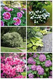 12 Best Annual Flowers For by 12 Best Bushes To Plant Under Trees While Not The Easiest Place