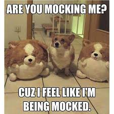 Grappige Memes - 10 grappige memes memes funny animal and animal