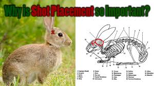 How To Hunt Squirrels In Your Backyard by Shot Placement On Small Game Air Rifle Hunting Tips U0026 Tricks