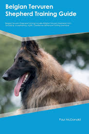 belgian shepherd video belgian tervuren shepherd training guide belgian tervuren shepherd