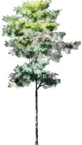 watercolor tree watercolor world pinterest watercolor trees