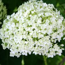 June Flowers - june flowers wordless wednesdays new house new home