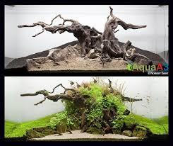 Aquascape Tree 44 Best Aquascape Images On Pinterest Aquarium Ideas