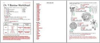 zoology u2013 phylum cnidaria and ctenophora review worksheet