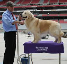 large dog grooming table mighty mite dog gear dog grooming table covers
