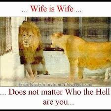 Funny Wife Memes - wife is wife whether you re a lion or a human seriously funny