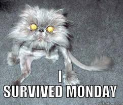 Tuesday Funny Memes - tuesday cat survival quickmeme
