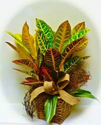 funeral plants http funeralplantsnames spruz funeral plants for men