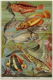 deep sea fish art print ready to frame antique lithograph c